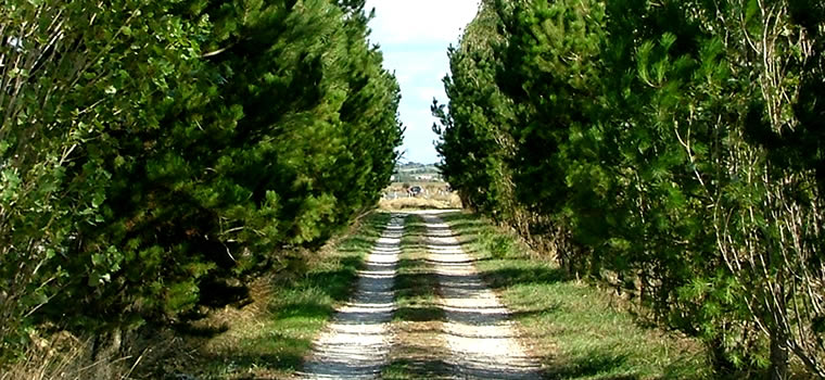 Access road country house Chianti Florence vacation in Tuscany Italy